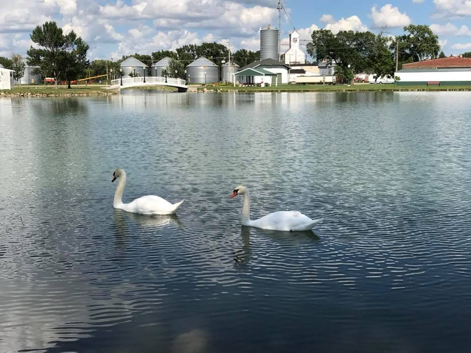Lake Prior is home to a pair of beautiful swans.